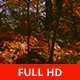 Into the Forest - VideoHive Item for Sale