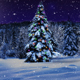 Christmas Tree The Night Woods - VideoHive Item for Sale