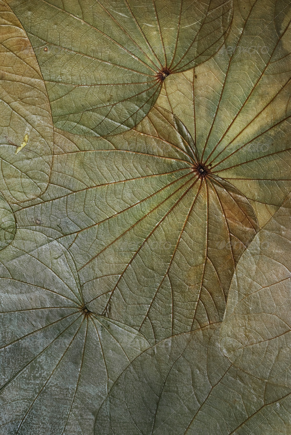 Leaf Texture - Stock Photo - Images