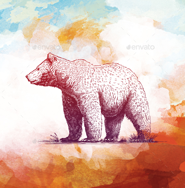 Engraving Bear on watercolor background - Animals Illustrations