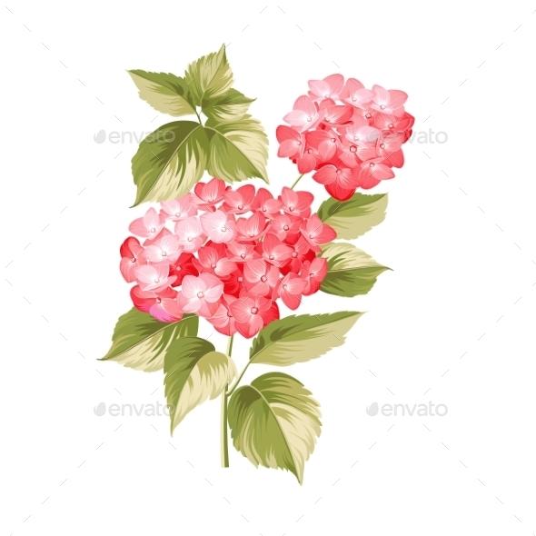 The Hortensia Flower - Flowers & Plants Nature