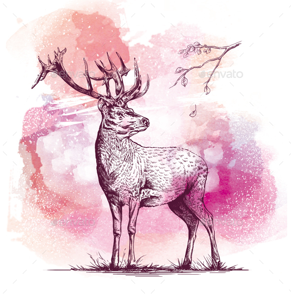 Engraving Deer on watercolor background - Animals Illustrations