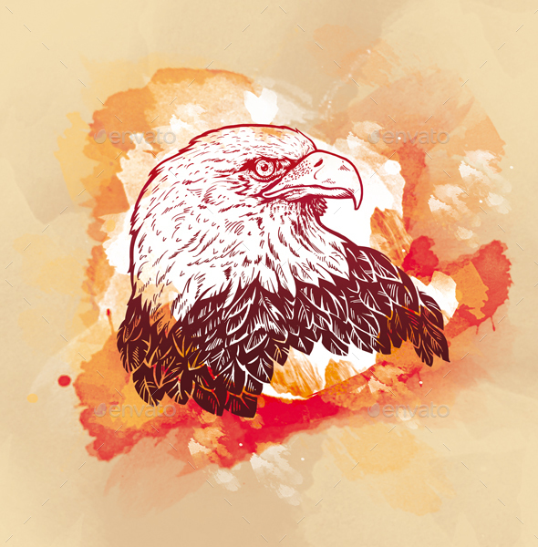 Engraving Eagle on watercolor background - Animals Illustrations