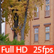Wooden Built Luxury House - VideoHive Item for Sale