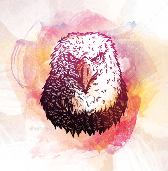 Eagle Engraving on watercolor background - Animals Illustrations