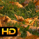Autumn Leaves on Lawn - VideoHive Item for Sale