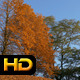 Autumnal Trees and Blue Sky - VideoHive Item for Sale