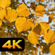Yellow Leaves in Autumn - VideoHive Item for Sale