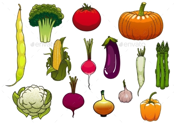 Fresh Vegetables From The Autumn Harvest - Food Objects