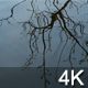 Winter Tree Reflection - VideoHive Item for Sale