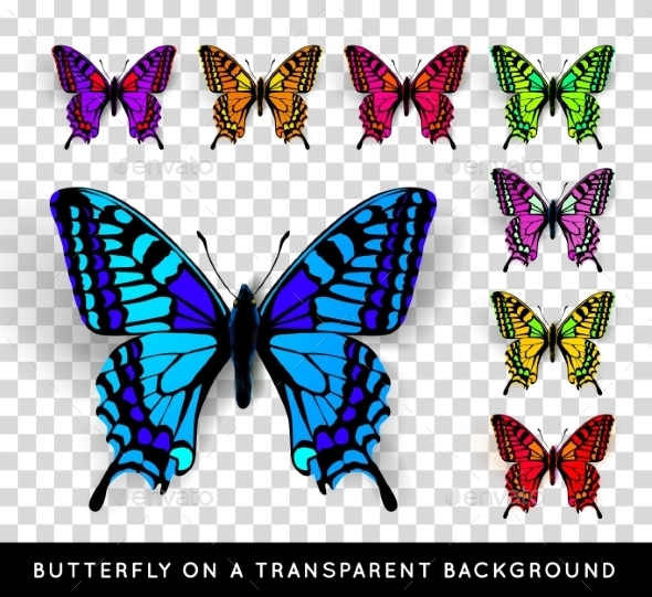 Butterfly on Transparent Background - Miscellaneous Vectors