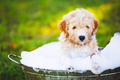 Adorable Cute Young Puppy - PhotoDune Item for Sale