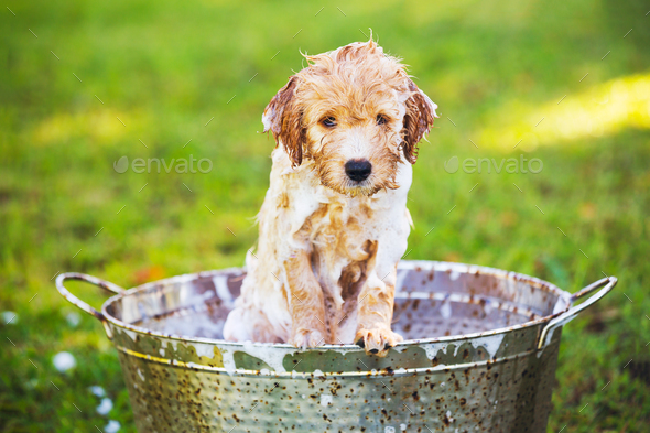 Adorable Cute Young Puppy - Stock Photo - Images