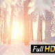 Sunny Winter Forest Inside - VideoHive Item for Sale