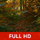 Wild Woods - VideoHive Item for Sale
