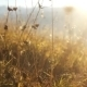Grass In The Mountains During a Sunset. - VideoHive Item for Sale