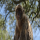 Monkey Sitting Under Tree - VideoHive Item for Sale