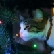 Cute Cat Playing With Ornament On Christmas Tree - VideoHive Item for Sale