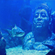 Shark Swims Near Submerged Ancient Statue Of Man - VideoHive Item for Sale