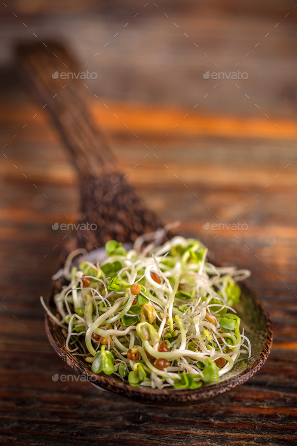 Heap of fresh sprouts - Stock Photo - Images