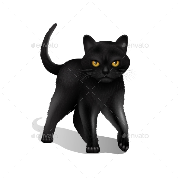 Black Cat Realistic - Animals Characters