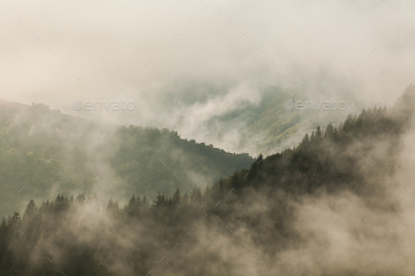 Forest and fog - Stock Photo - Images