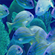 Countless Exotic Fish Swimming Near Reef - VideoHive Item for Sale