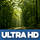 Magical Forest Road - VideoHive Item for Sale
