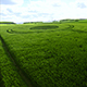 Large Green Field In Summer Season - VideoHive Item for Sale