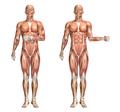 3D medical figure showing shoulder internal and external rotatio - PhotoDune Item for Sale