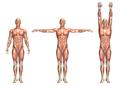 3D medical figure showing shoulder abduction and adduction - PhotoDune Item for Sale