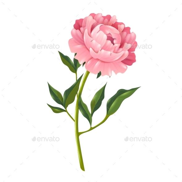 Peony Realistic Illustration  - Flowers & Plants Nature