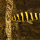 Fish - VideoHive Item for Sale