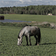 A Horse in a Meadow 8 - VideoHive Item for Sale