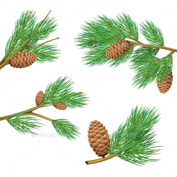 Pine Branches Set - Nature Conceptual