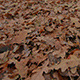 Oak Leaves on the Ground - VideoHive Item for Sale