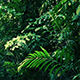 Moving Under Dense Jungle Canopy - VideoHive Item for Sale