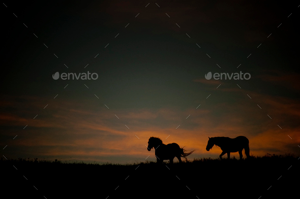 Wild horses at sunset - Stock Photo - Images