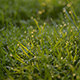 Summer Morning Dew on the Grass - VideoHive Item for Sale