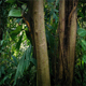 Moving Through Dense Jungle  - VideoHive Item for Sale
