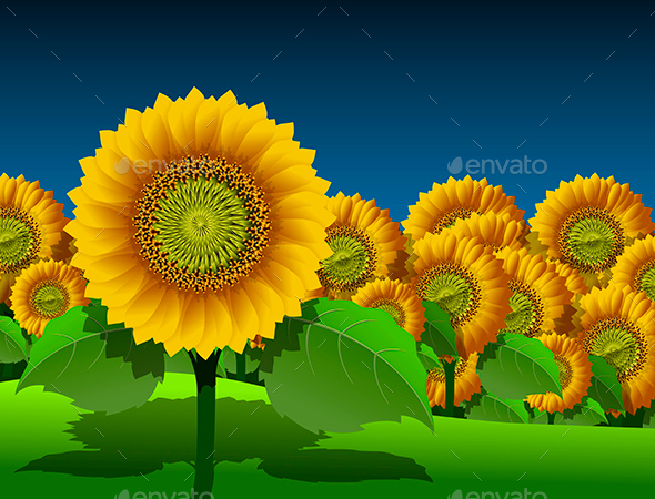 Sunflowers - Backgrounds Decorative