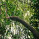 Gliding Under Many Tall Trees In Tropical Forest - VideoHive Item for Sale