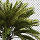 Palm Tree Isolated Object - GraphicRiver Item for Sale