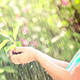 Young Plant In Hands - VideoHive Item for Sale