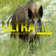 Wild Pigs 6 - VideoHive Item for Sale