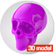 SCULL 3D MODEL - 3DOcean Item for Sale