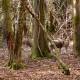 Deer forest  - VideoHive Item for Sale