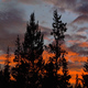 Sunset and Trees - VideoHive Item for Sale
