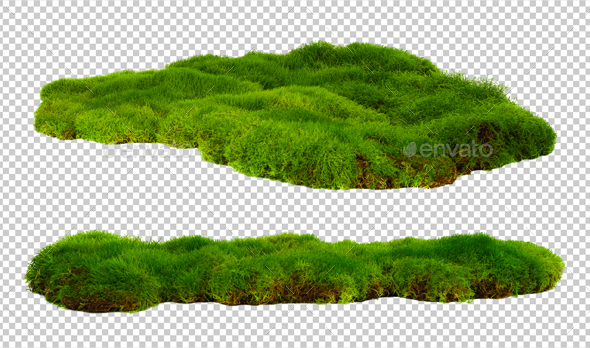 Green moss - Nature & Animals Isolated Objects