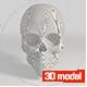 ELEGANT SCULL 3D MODEL